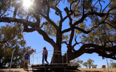 Innamincka – the outback oasis you never knew existed