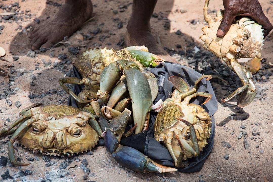 Freshly-caught crabs
