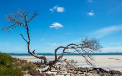 Port Lincoln – fishing and feasting in the seafood capital