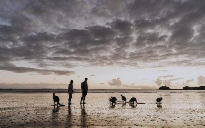 Wild encounters in laid back Mackay, QLD