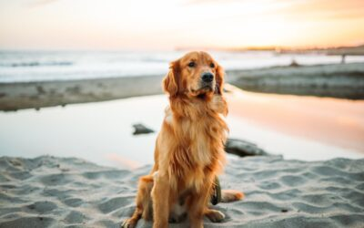 Spend a sunny day at these dog beaches in Victoria