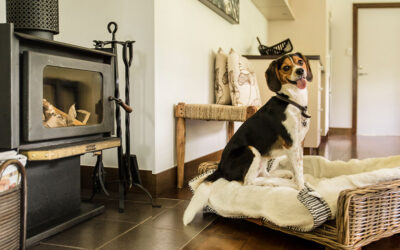 Pawfect stays – Australia's best dog friendly hotels