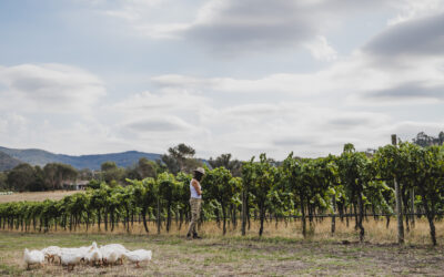 Up-and-coming boutique wineries you need to visit in Australia