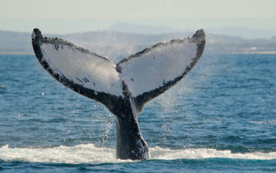Whale watching in NSW – Best tours and experiences in 2021