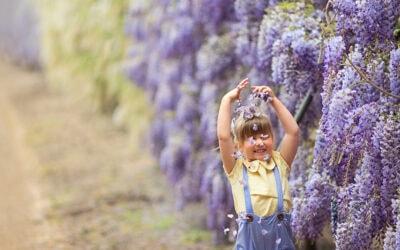 12 beautiful botanic gardens to visit in Australia